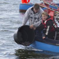 Seit 2010 setzen Fischer und Angler gemeinsam Jungaale in der Schlei aus