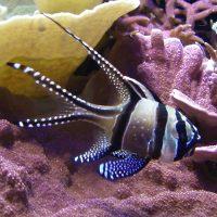 Wunder der Meere und wichtige Ökosysteme