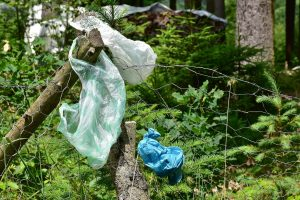 Entdeckung: Raupe als Plastik-Recycler