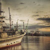 Wird die Elektrofischerei nun überall in der EU erlaubt?